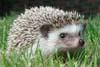 spikeyhedgehog userpic