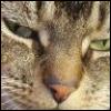 valcon4 userpic