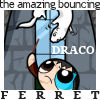 [hpp] 'bouncing ferret'