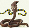 snake_elena