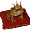 frogprincess0_0 userpic