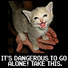 zelda kitty
