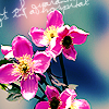 Violet fleur