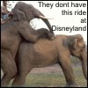 Elephant sex ride