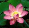 byzantium_lotus userpic