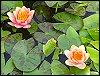 cherrylips411 userpic