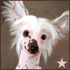 dana_redde: happy crested