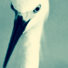Reality leaves a lot to the imagination: egret