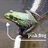 pushfrog