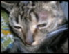ktisdashiz75 userpic