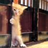 Ninja cat! He sneaks into your house!
