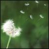 floaty wish