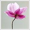 kawaiipansy userpic