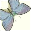 addviaacc userpic