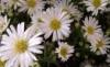 maje lubimyja kvetki