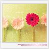 brokenflowers userpic