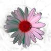 2pota userpic