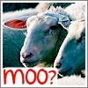 spearmintcookie userpic