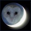 Nichneven Silver Oak }+{meryt Ra}+{ [userpic]