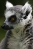 lemur67 userpic