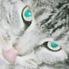 kittengargoyle userpic