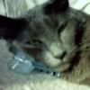 mulderfatcat userpic