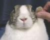Raised Hand Bunny