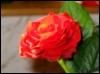 victoria_regia userpic