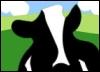 Ben & Jerry's, cows