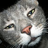 ds: cat