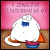 sibcat userpic