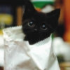 Kitten Cupcake
