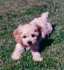 puppy_dawg userpic