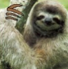 four_toed_sloth userpic