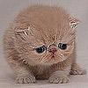 cat_bee