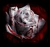 scarlet_hel userpic