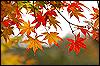 Merlin Pendragon: Autumn