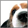 Animals: Puppy!