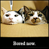 Bored Now by Sith_Dragon