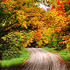 Autumn: Road (Curved)