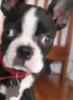 caesar pup