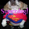 superdog!