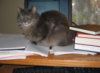 kitty writing my diss