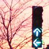 светофор, выбор, осень, путь