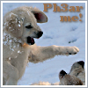 A work in progress: Ph3ar Me Puppies