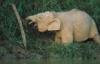 просто - слоня