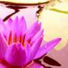 purple_virtue userpic