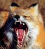 stana_fox userpic