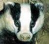 badger_c userpic