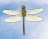 blue, dragonfly, background